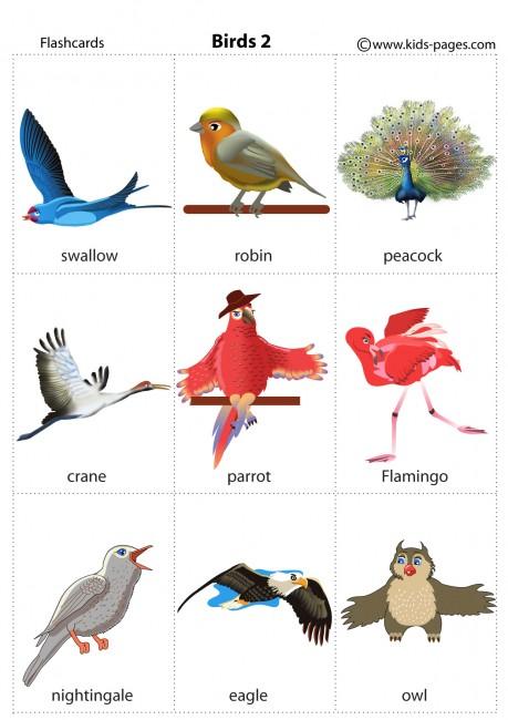 Birds Flashcard