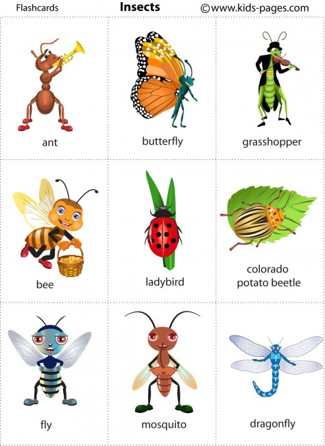 types of insect legs pdf