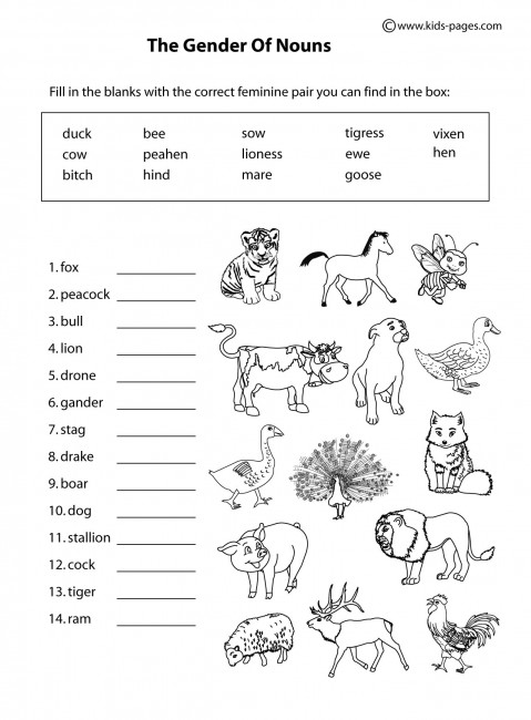 animals gender b w worksheet. Black Bedroom Furniture Sets. Home Design Ideas